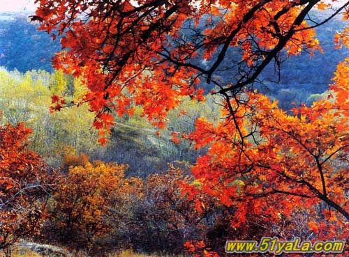 内蒙古风景 图片 内蒙古自然风景图片 内蒙古风