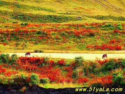 米亚罗天气_米亚罗风景区旅游,米亚罗风景区门票和图片介绍 中国旅游网