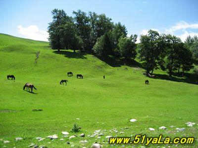 中国最美的六大草原  - 大路的自然世界 - 大路有明