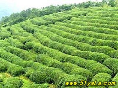 [转载]茶山花海生态旅游区