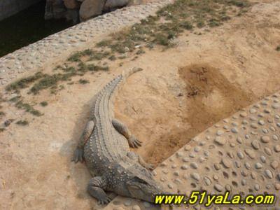中国石家庄旅游景点 中国旅游地图 高清图片