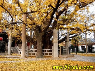 行车路线-怎么去盘县古银杏风景名胜区[贵州安顺]旅游